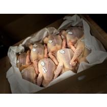 Colis de 5 Pigeonneaux entiers - Etouffés et Plumés - 500g environ
